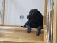 Bürohund Pedro liegt auf der Bürostiege