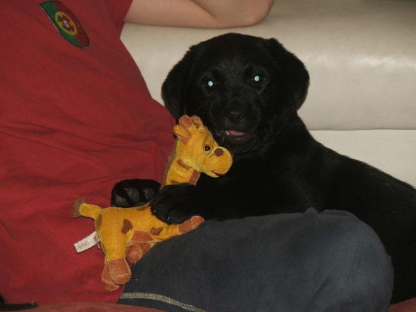 Bürohund Pedro als Baby mit seiner Stoffgiraffe