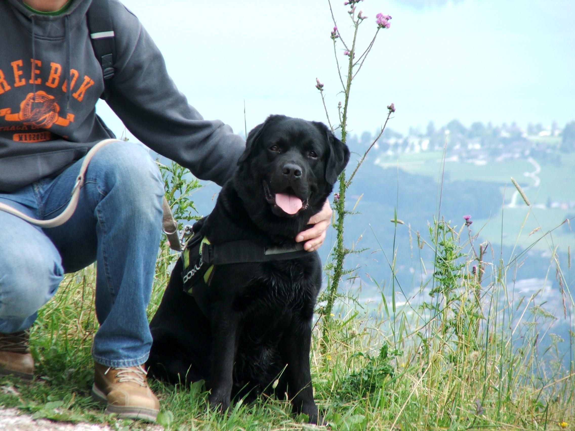 Bürohund Pedro im Hintergrund die Aussicht vom Zwölferhorn in St. Gilgen