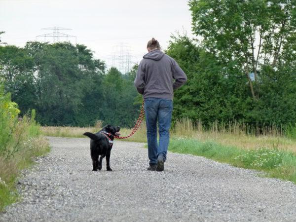 Bürohund Pedro beim Spaziergang auf einem Feldweg mit Richard Friedl