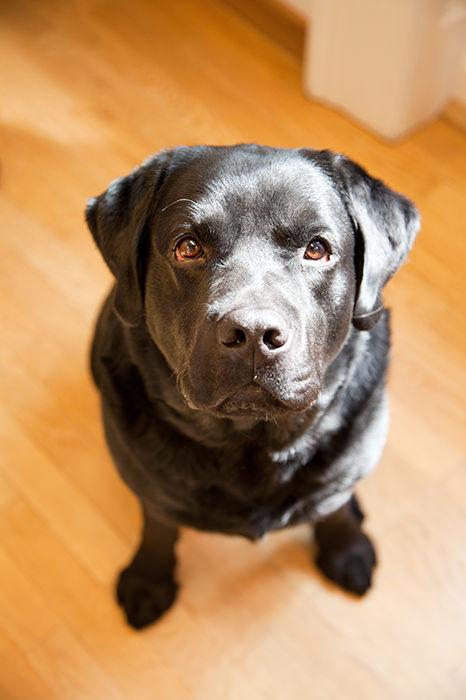 Pedro, der Bürohund von ITSM Partner sitzt und schaut auf zum Fotografen